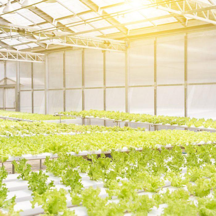 Controlled Environment Farming